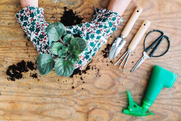 Crop hände potting pflanzen