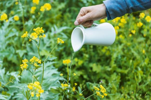 Crop hand bewässerung von blumen