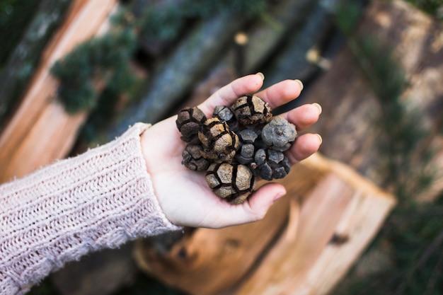 Crop hand mit koniferen zapfen