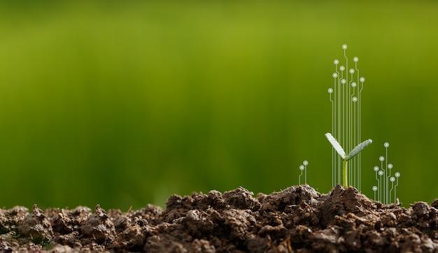 Csr durch das pflanzen von bäumen, csr-konzept und unternehmen, die baumsetzlinge pflanzen