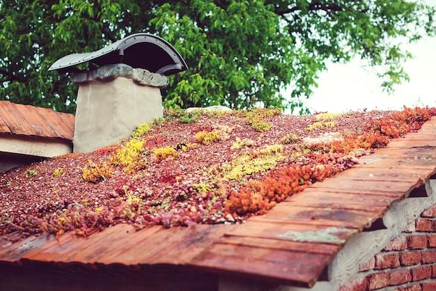Dach mit sedum. umweltfreundliches gebäude. grünes ökologisches grasdach auf holzgebäude. dach bedeckt mit vegetation meist sedum sexangulare.