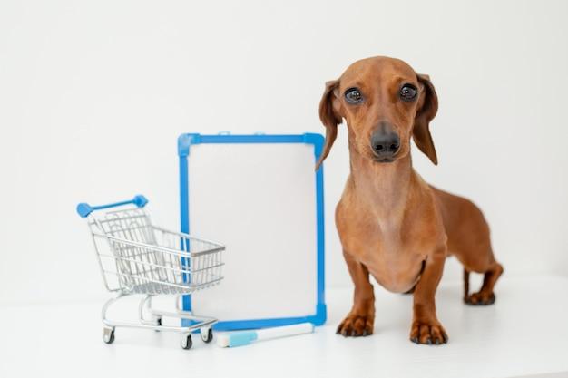 Dackelhund sitzt neben einem weißen leeren brett und einem einkaufskorb isoliert