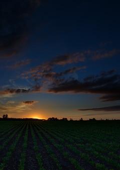 Dämmerungshimmel mit wolken im morgengrauen über einem feld mit landwirtschaftlichen plantagen.