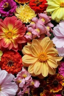 Dahlien und löwenmäulchen als floraler hintergrund heller natürlicher hintergrundtexturblumenstrauß draufsicht