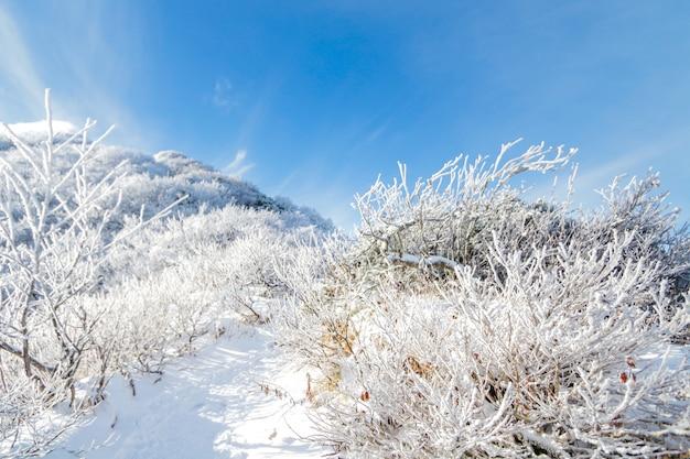 Daisen berg in japan winter haben viel schnee