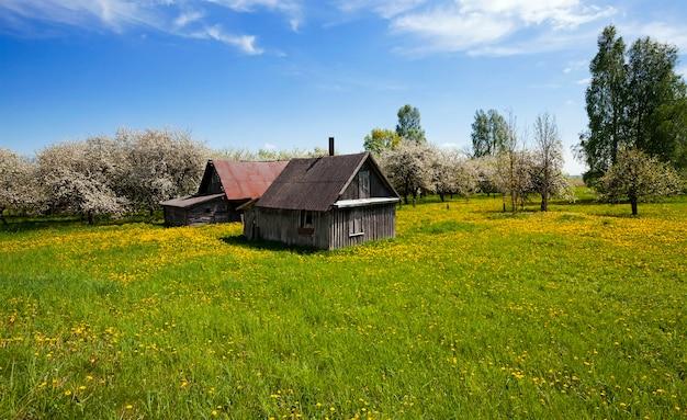 Das alte haus liegt in ländlichen gebieten. frühling, obstbäume blühen
