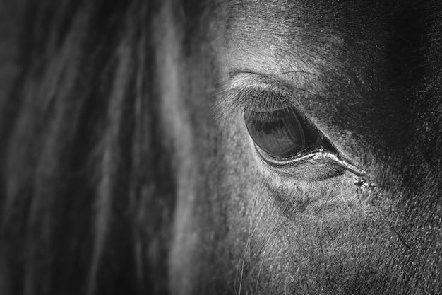 Das auge des pferdes