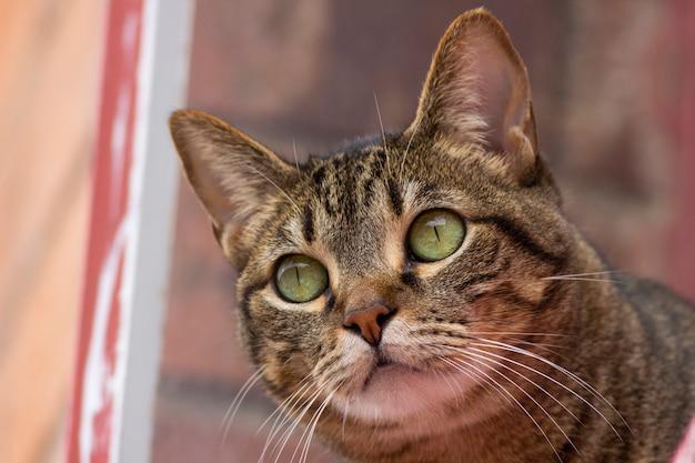 Das aussehen einer katze