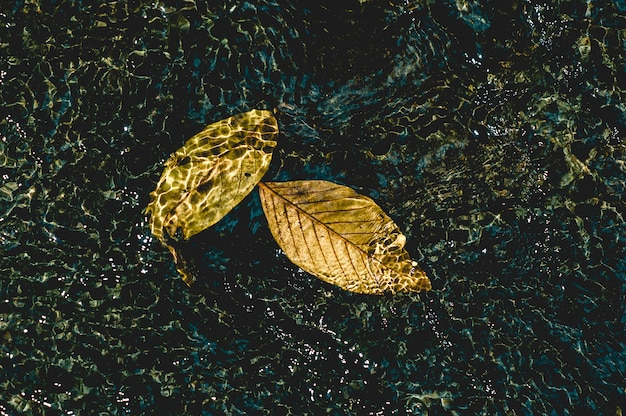 Das bild des gelbs verlässt unter dem wasser, das natürliches konzept mit kopienraum durchfließt