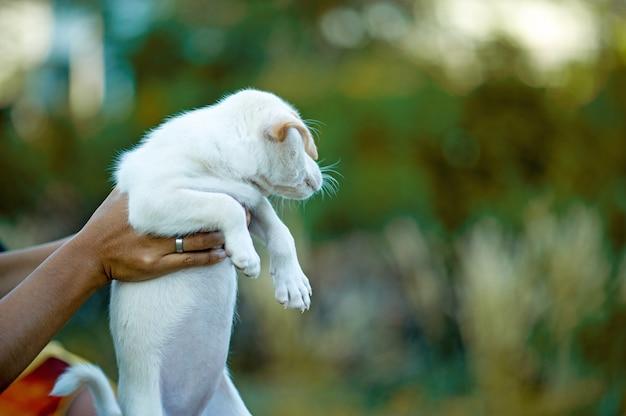 Das bild des kleinen welpen kreaturen, die mit menschen spielen können hundeliebhaber-konzept