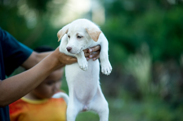 Das bild des kleinen welpen kreaturen, die mit menschen spielen können hundeliebhaberkonzept