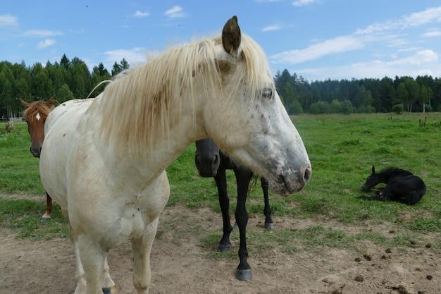 Das bild eines pferdes im wald. natürliche zusammensetzung. fotografie.