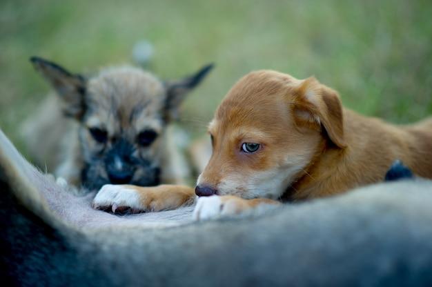 Das bild eines welpen, der muttermilch vom hunger hundeliebhaberkonzept isst
