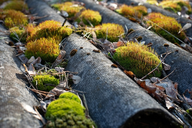 Das dach auf dem alten dach ist mit moos bedeckt.