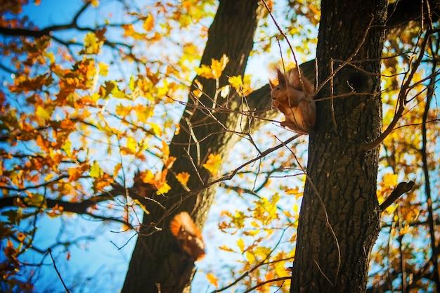 Das eichhörnchen isst nüsse. selektiver fokus