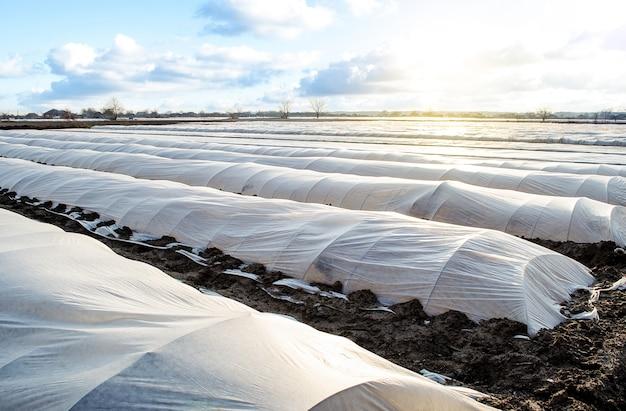 Das feld der kartoffelplantage ist mit spunbond-spunlaid-vliesstoff für die landwirtschaft bedeckt