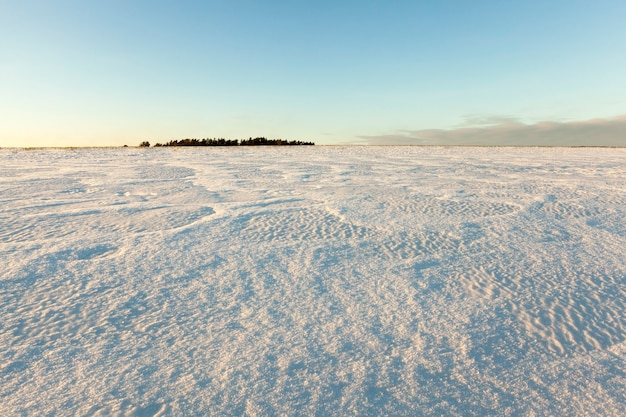 Das gebiet des feldes, das im winter mit reinem schnee bedeckt ist. foto nahaufnahme. im hintergrund ein blauer himmel