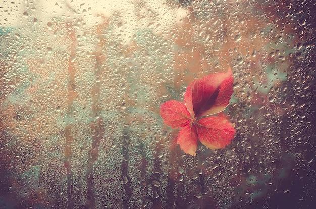 Das gefallene blatt klebt am fenster, das durch regentropfen nass wird. warmer blick aus dem fenster fo
