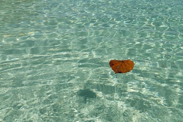 Das gefallene blatt schwimmt im reinsten wasser des tropischen meeres.