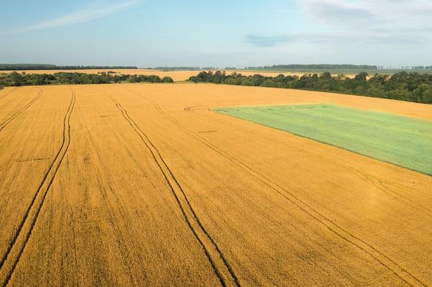Das gelbe weizenfeld und die grünhaferplantage sind ein hoher schusswinkel an einem klaren sommertag...