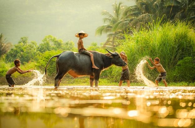 Das glückliche lustige spielende wasser des jungenfreunds und tierbüffelwasser auf fluss