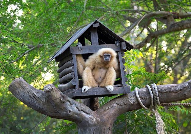Das haus der gibbons im wald, die waldatmosphäre im zoo.