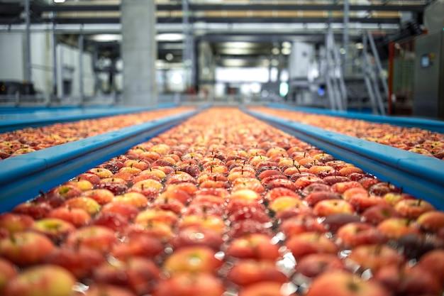 Das innere der lebensmittelverarbeitungsanlage mit äpfeln, die in wassertankförderern schwimmen, wird sortiert gewaschen und zu verpackungslinien transportiert