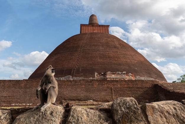 Das jetavanaramaya ist ein buddhistisches stupa in den ruinen von jetavana in der antiken stadt anuradhapura in sri lanka