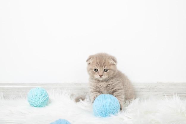 Das kätzchen hält einen fadenball mit den pfoten. kätzchen spielt mit fadenbällen. kätzchen in einem hellen raum