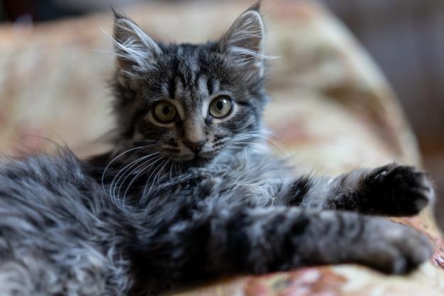 Das kätzchen liegt auf einem sofa