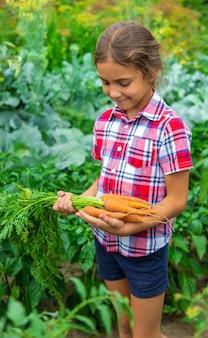 Das kind hält die karotte im garten in den händen. selektiver fokus.