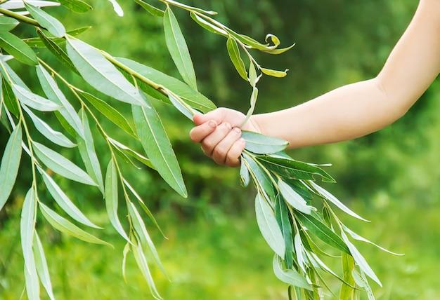 Das kind hält einen ast in seinen händen. schutz von pflanzen. selektiver fokus