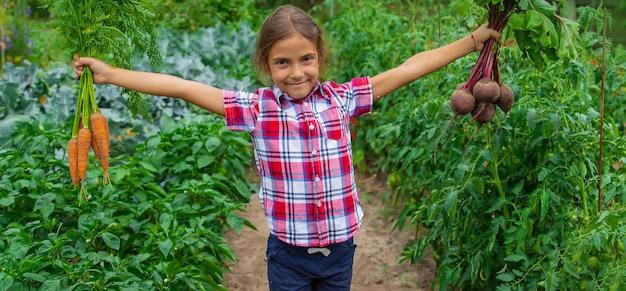 Das kind hält im garten rüben und karotten in den händen. selektiver fokus. essen.