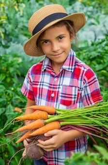 Das kind hält im garten rüben und karotten in den händen. selektiver fokus.