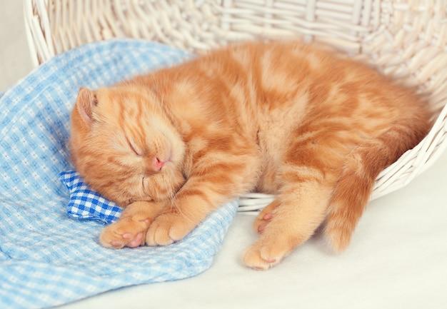 Das kleine ingwerkätzchen schläft auf einem kleinen kissen