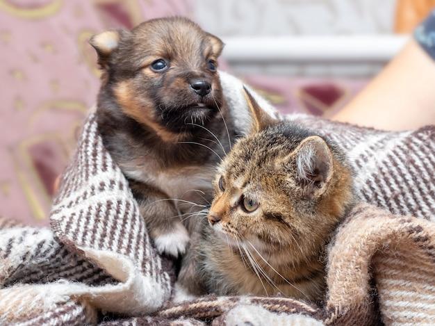 Das kleine kätzchen und der welpe werden mit einem plaid zugedeckt, das kätzchen und der welpe werden unter einer decke gewärmt