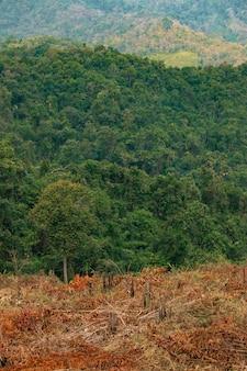 Das konzept der entwaldung besteht aus zerstörten wäldern und reichlich vorhandenen wäldern.