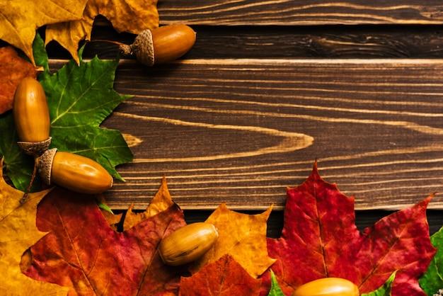 Das konzept der herbsttapete. trockene ahornblätter mit einem rahmen für ihren text ausgekleidet