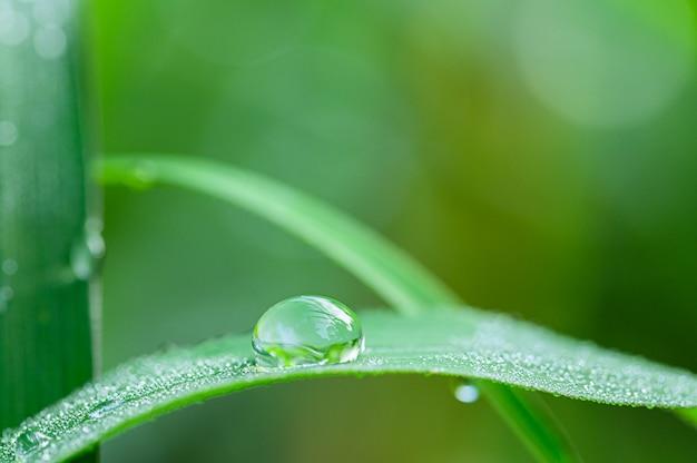 Das konzept der liebe die grüne umgebung der welt wassertropfen auf den blättern verschwommener bokeh-hintergrund