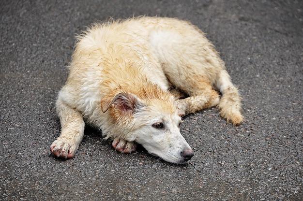 Das konzept der obdachlosen tiere