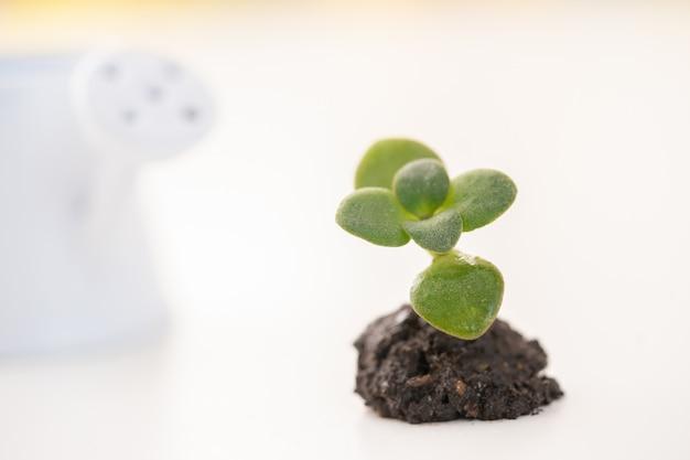 Das konzept eines neuen lebens. eine kleine pflanze im boden und flockige umrisse einer weißen gießkanne.