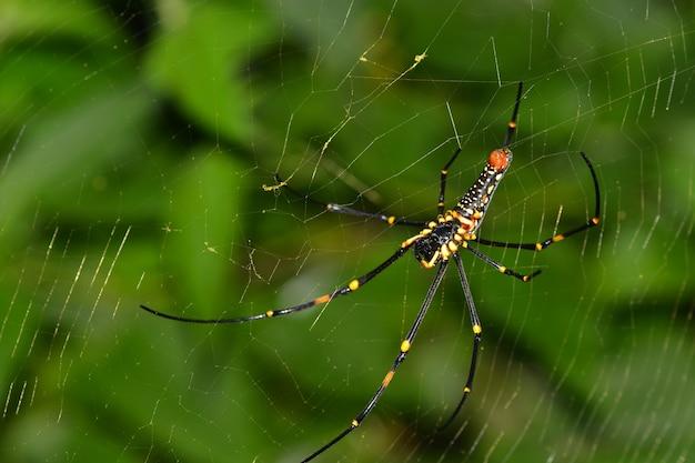 Das leben der spinne, das natürliche leben des insekts im netz in der natur