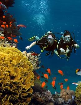 Das liebespaar taucht zwischen korallen und fischen im meer