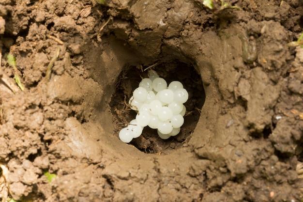 Das loch im boden mit dem ei, das schnecke legt
