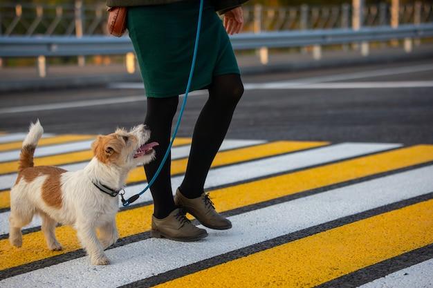 Das mädchen bringt dem hund bei, den fußgängerüberweg zu überqueren