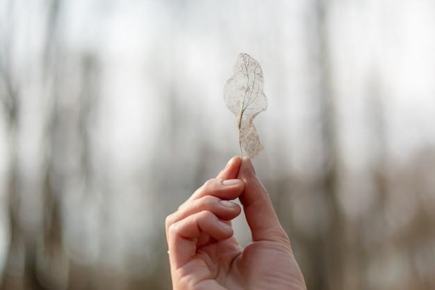 Das mädchen hält in ihrer hand ein ungewöhnliches trockenes skelettiertes blatt in ihrer hand auf einem parkhintergrund