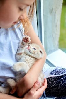 Das mädchen spielt mit einem britischen kleinen verspielten kätzchen zu hause am fenster.