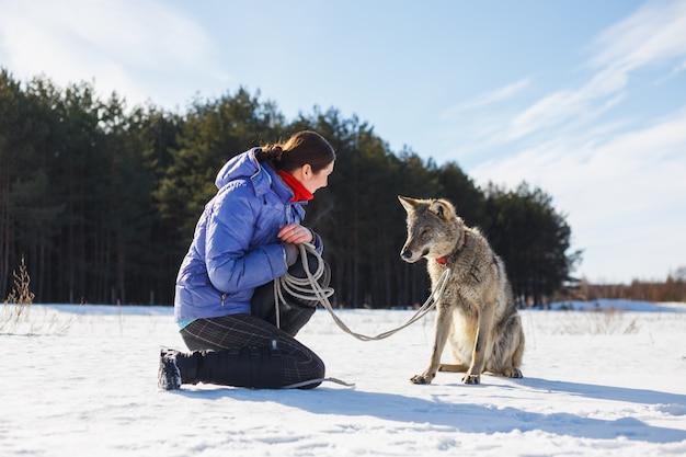 Das mädchen trainiert einen echten grauen bösen wolf.