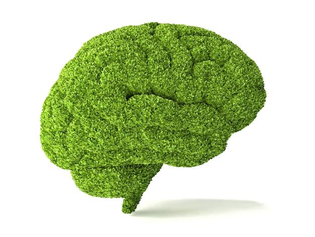 Das menschliche gehirn ist mit grünem gras bedeckt. die metapher der wilden, natürlichen oder unvollkommenen intelligenz
