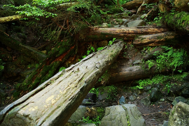 Das moos bedeckte felsen und gefallene bäume ein altes waldland